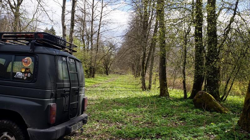 леса в беларуси