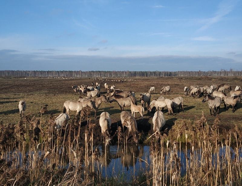экотропы беларуси